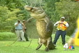 alligator-nbc