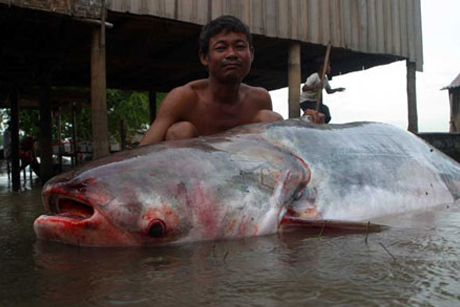 catfish-mekong