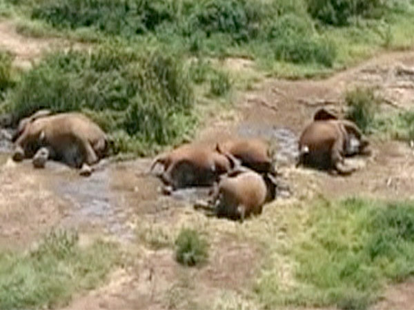 20 elephants have been found slaughtered in the past 24 hours in Boni ...