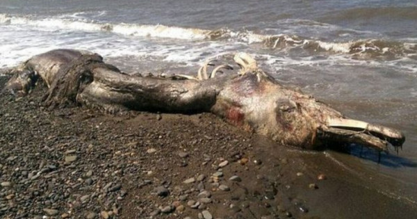 Utah remains of mysterious creature discovered at bear lake freerunsca Gallery