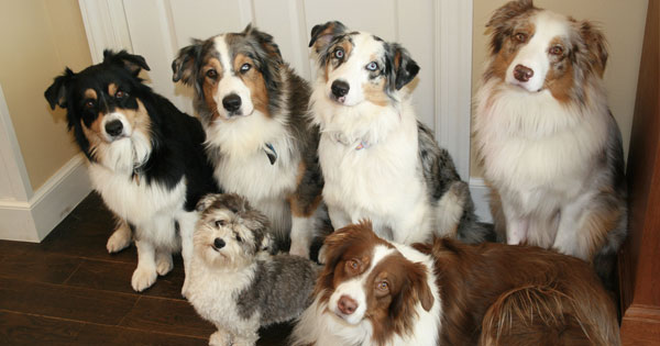 grandmother loves dogs who use Viagra on husband