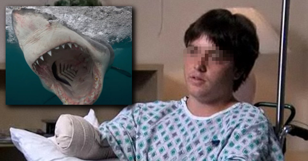 Greenpeace activist gets arm bitten off after hugging a white shark