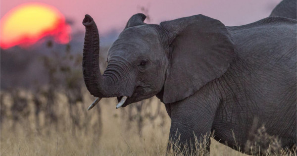 John F. Rosenberg traveled with his wife to Namibia to indulge in exotic meats such as wild ox, elephant and even nearly extinct white rhinoceros before dying from respiratory conditions.
